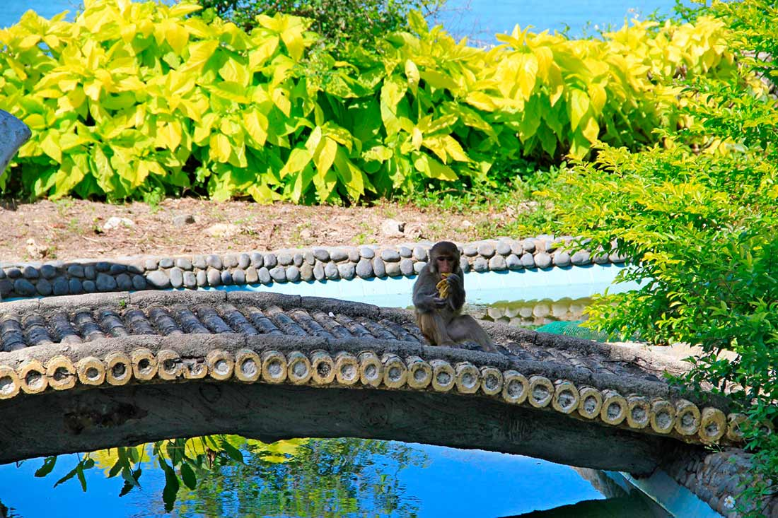 Обезьяний остров (Monkey Island)