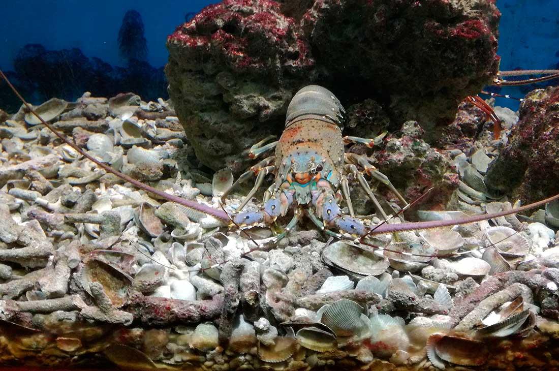Океанографический музей Нячанг
