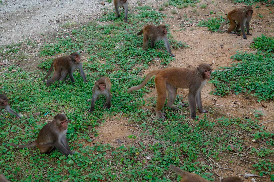 Остров обезьян-Нячанг (Monkey-Island)