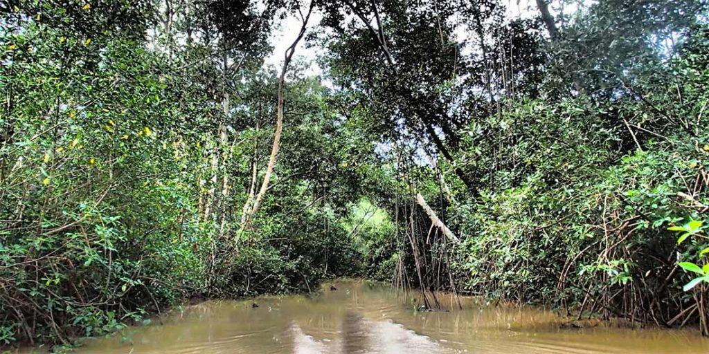 Мангровые джунгли