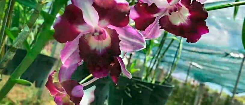 Остров Орхидей в Нячанге, как добраться туда самостоятельно и что посмотреть