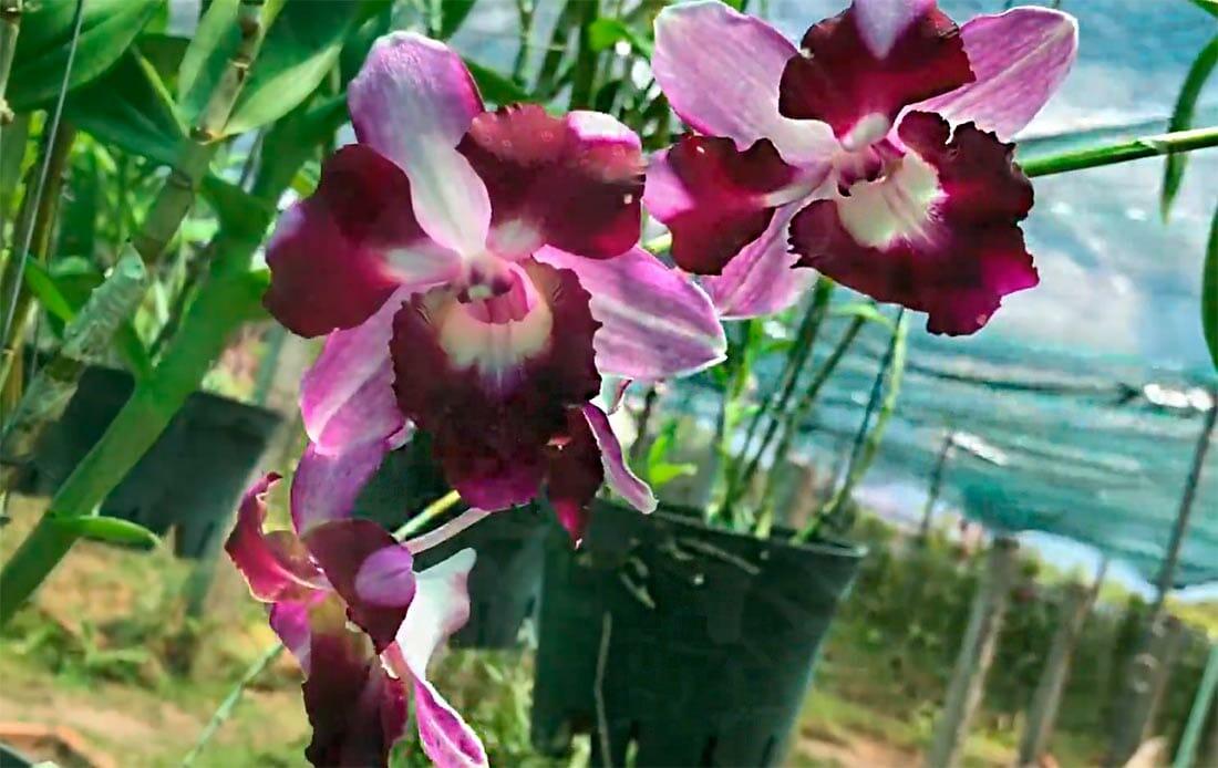 Северные острова Нячанга: остров обезьян и остров орхидей