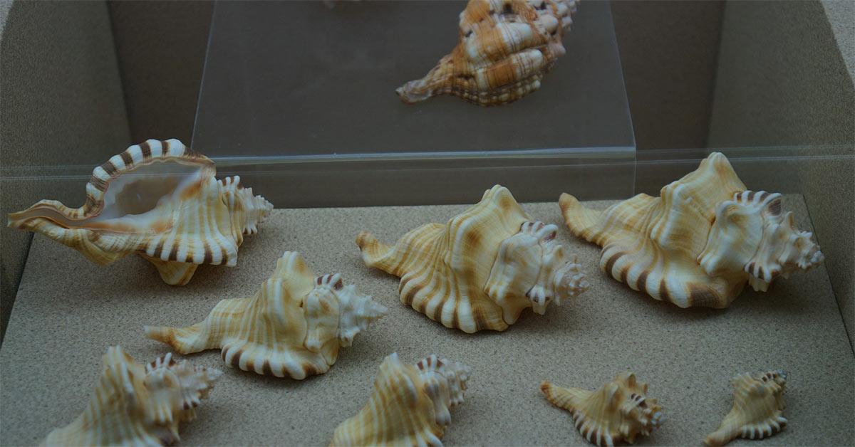Музей морских раковин-Хайнань